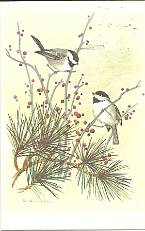 Postcard Of Chickadees By R Winslow P35341