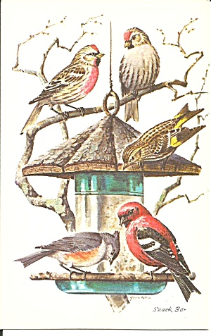 Redoles Pine Siskin Tufted Titmouse Crossbill Postcard p35342 (Image1)