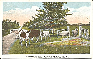 Chatham NY Herd of Cows 1923 postcard p35373 (Image1)