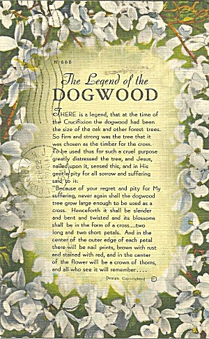 Legend Of The Dogwood 1948 Postcard P35412