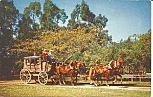 Knott S Berry Farm Stage Coach Postcard P35532