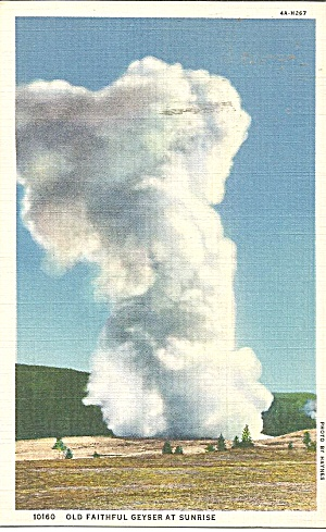 Yellowstone Park Old Faithful Geyser  postcard p35681 (Image1)
