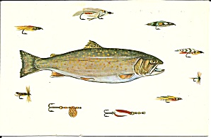 Cape Cod Ma Squaretail Trout Postcard P35841