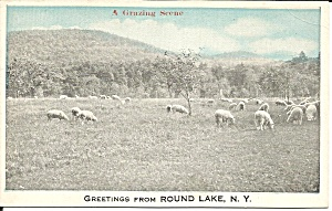 Round Lake NY Flock of Sheep postcard p35850 (Image1)