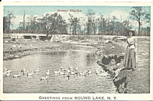 Round Lake NY Ducks in Lake postcard p35851 (Image1)