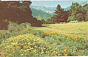 Santa Barbara CA Botanic Gardens p35945 (Image1)
