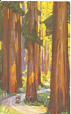 Redwoods in California Southern Pacific RR postcard p36115 (Image1)