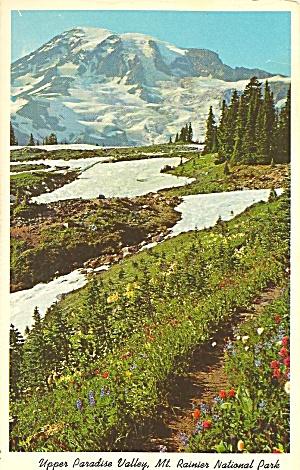 Mt Rainier National Park WA Upper Paradise Valley p36181 (Image1)