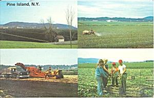 Pine Island Orange County NY  Onion Capital p36186 (Image1)