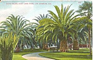 Los Angeles CA East Lake Park Date Palms 1909 p36411 (Image1)