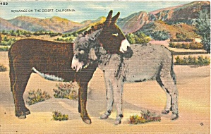 Burros Romance On The Desert Postcard P36417