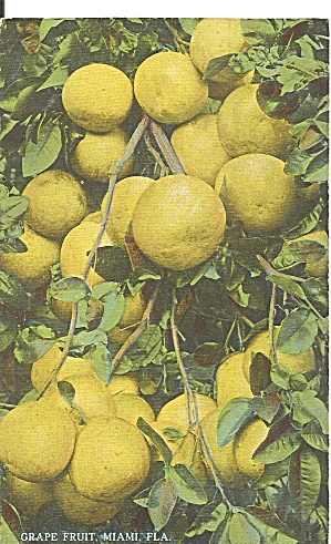 Miami FL Grape Fruit Postcard p36446 (Image1)