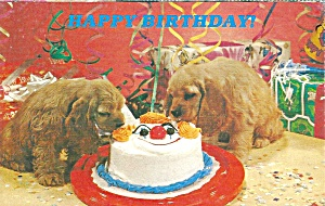 Puppies eating birthday cake postcard p36454 (Image1)