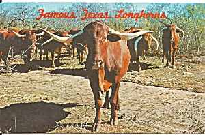 Famous Texas Longhorns Postcard P36533