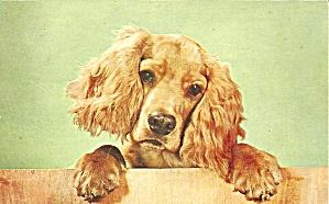 Cocker Spaniel postcard p36562 (Image1)