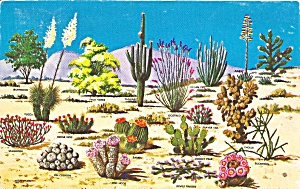 Cacti And Desert Flora Of Southwest Postcard P36652