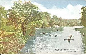 New York Zoological Park  Bronx Lake p36672 (Image1)