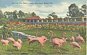 Miami FL Parrot Jungle Flamingos postcard p36678 (Image1)