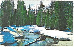 Winter in The Cascades WA  Postcard p3680 (Image1)