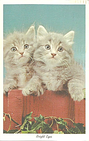 Pair Of Kittens Bright Eyes Postcard P37093