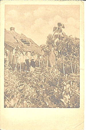Family And Damaged Roof Wwi France P37148
