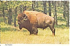Bull American Bison Buffalo Postcard p37217 (Image1)