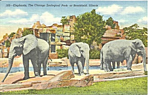 Brookfield IL Elephants Chicago Zoological p37396 (Image1)