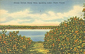 Florida Orange Grove On A Lake P37426