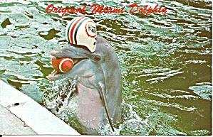 Miami FL Miami Sea Quarium Dolphin p37445 (Image1)