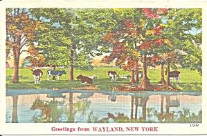 Wayland NY Farm Scene p37448 (Image1)
