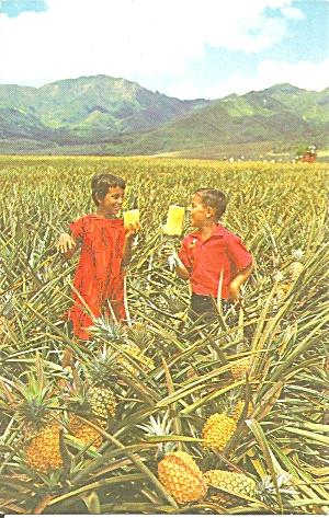 Hawaii Field Ripe Pineapples p37549 (Image1)