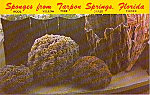 Sponges From Tarpon Springs FL p37658 (Image1)