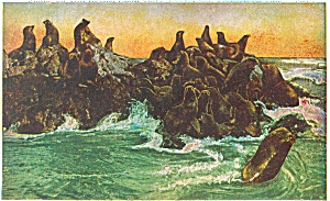Seals San Francisco CA Postcard p3783 (Image1)