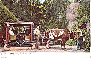 Madeira Portugal Ox Cart Carro De Bois P37849