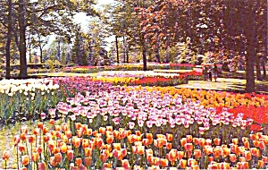 Mansfield Ohio Tulips At Kingwood Center Postcard P37998