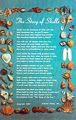 The Story Of Shells P38046