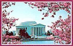 Jefferson Memorial Japanese Cherry Blossoms Washington Dc P38070
