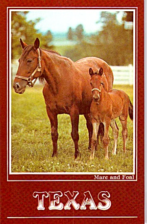 Mare and Foal Horse Farm Texas P38103 (Image1)