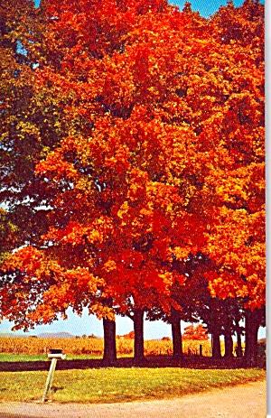 Autumn on the Farm P38123 (Image1)