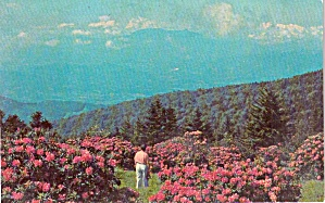 World s Largest Rhododendron Garden Roan Mountain NC TN P38153 (Image1)