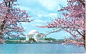 Jefferson Memorial Cherry Blossom Time Washington Dc P38226