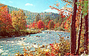 Stream Scene in Autumn Postcard P38245 (Image1)