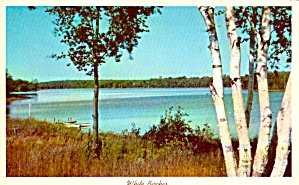 White Birches On A Lake Shore Postcard P38249