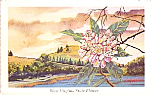 Big Laurel West Virginia State Flower P38299
