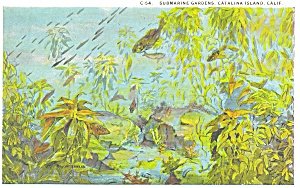 Submarine Gardens Catalina Islands CA  Postcard p3837 (Image1)