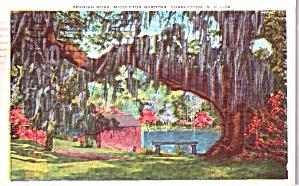 Charleston SC Middleton Gardens Spanish Moss P38527 (Image1)