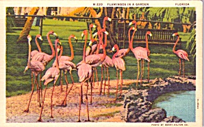 Flamingos In A Garden P38593