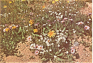 Alpine Flower Garden Chicago Museum Postcard