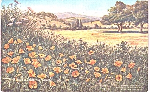 A Field of California Poppies p39120 (Image1)