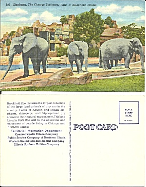 Brookfield IL Elephants at Brookfield Zoo p39149 (Image1)